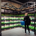 Dutch Shoppers Pick Own Herbs in Supermarket Garden