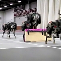 (Video) MIT's Robotic Cheetah can Now Leap Over Obstacles