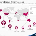 The World's Biggest Wine Producers