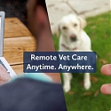 (Video) TeleVet Provides Boost To Veterinary Telemedicine With $5M Series A
