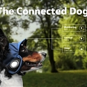 (Video) A Volkswagen Campaign Shows a Vision of the Connected Dog
