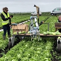 (PDF) Machine Learning Helps Robot Harvest Lettuce for the First Time