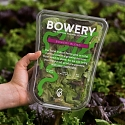 Bowery Raises $50M More For Indoor, Pesticide-Free Farms