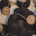 $5M Truffles : Israeli Startup Looks To Market Edible Fungi From Golan Heights